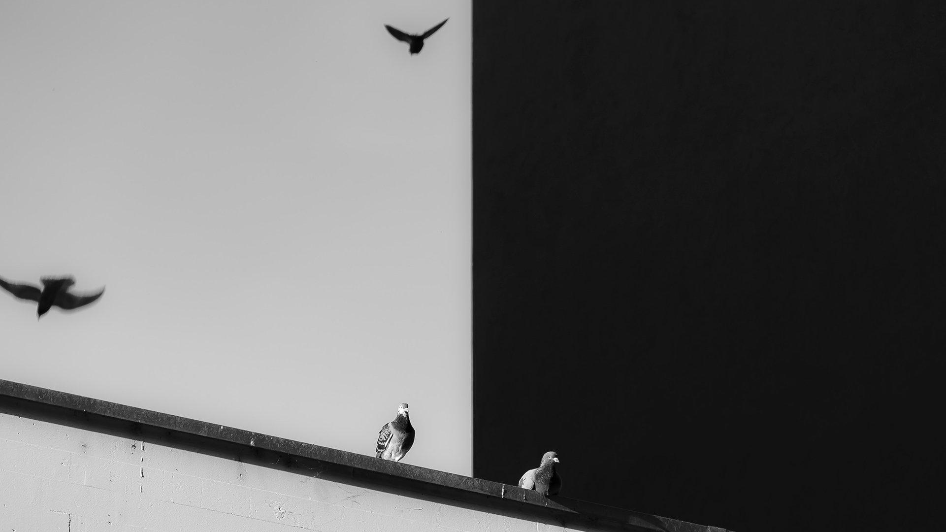 design-contrast